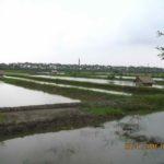 oraganic-shrimp-bengladesh-073